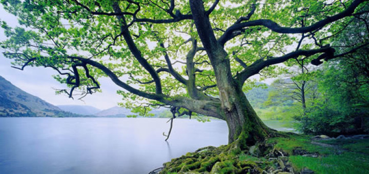 tree_by_water-720x340