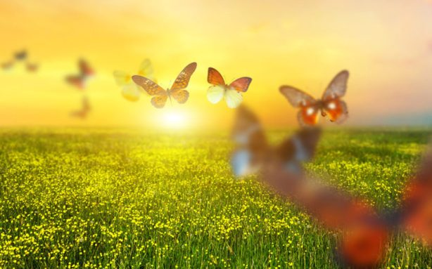 Colorful butterflies flying over spring meadow with flowers